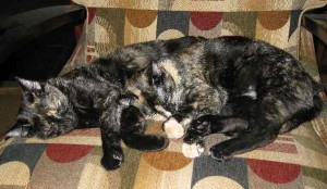 My Precious Cats