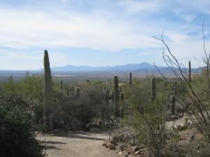 Arizona Desert Museum