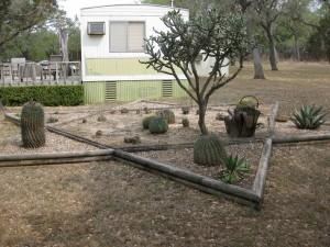 Jack's cactus garden