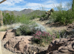 Wild flowers in desert terrain
