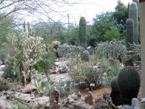 Lovely cactus garden