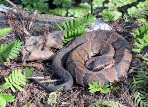 Tired snake