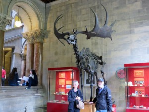 Fosters with skeleton of giant Irish deer