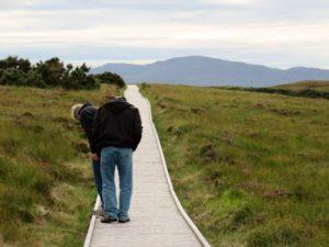 Walkway by bog fields