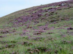 More of bog fields