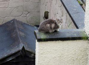 Resident outside my bedroom window